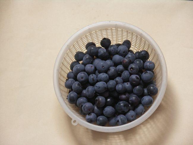 ブルーベリーの収穫2