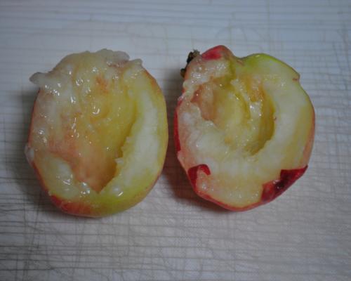 二つ割りの桃