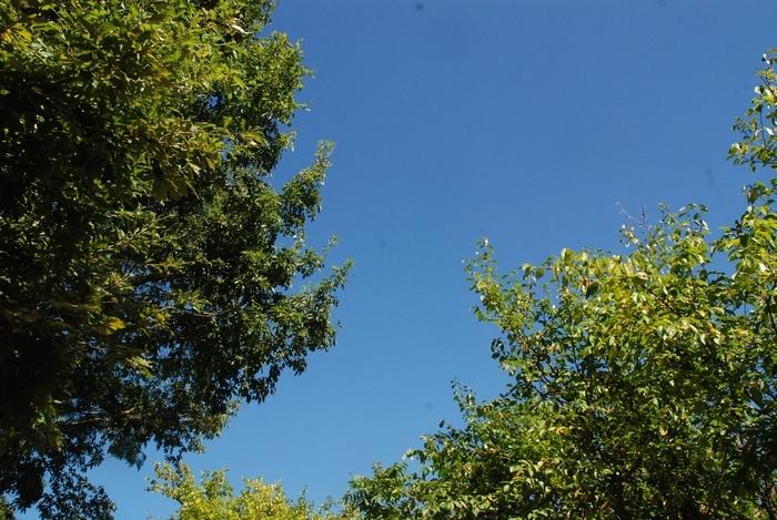 青い空と8