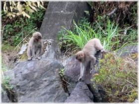 170624E 003猿@浦山34
