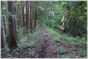 170708E 007横瀬への山道32