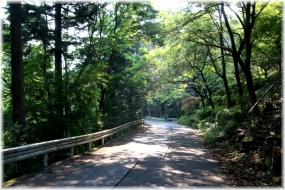 170708E 033樹林を歩く32