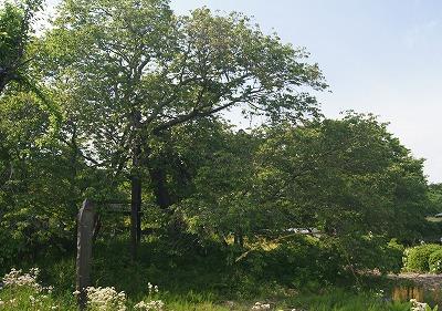 1705111449狩宿の桜