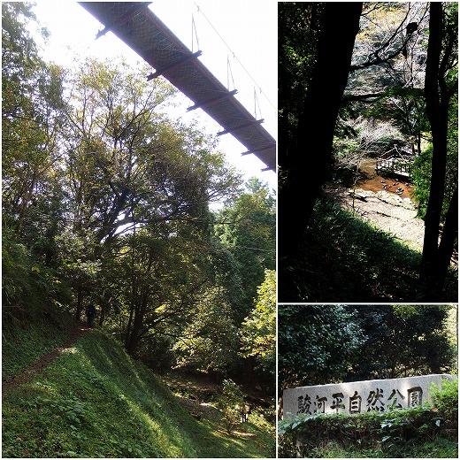 1610-23クレマチスの丘・駿河平自然公園