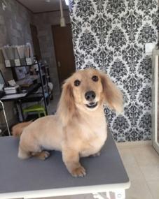 mayaさんの犬