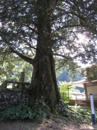 茶の文化館 123