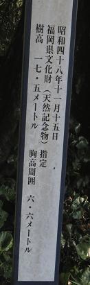 茶の文化館 119