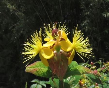 黄色い花蓑虫・コフキトンボ 004