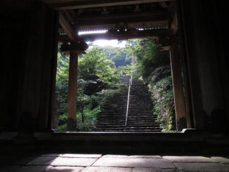 清水山ユキノシタ花 005