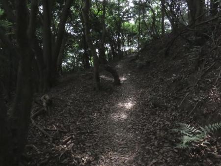 清水山ユキノシタ花 069
