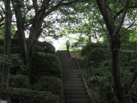 清水山ユキノシタ花 067