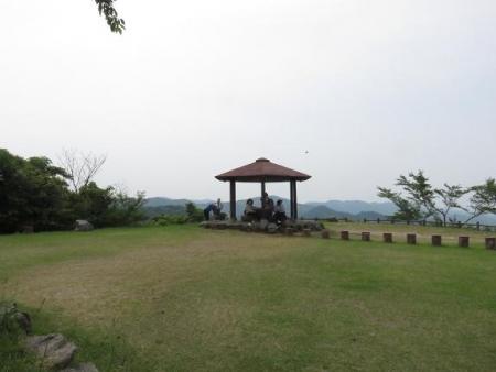 清水山ユキノシタ花 097