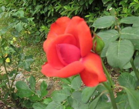 お花の蝶 016
