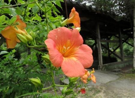 お花の蝶 004