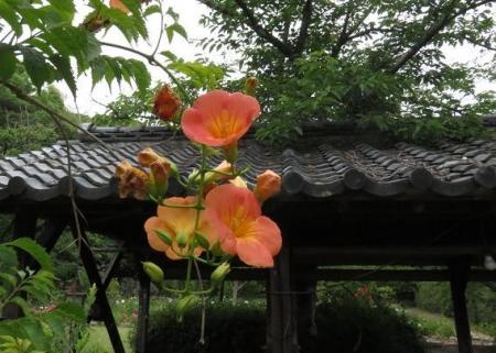 お花の蝶 002