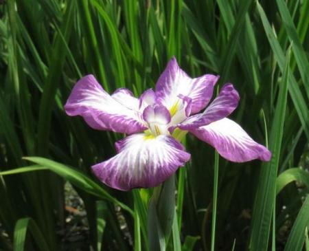 お花の蝶 099