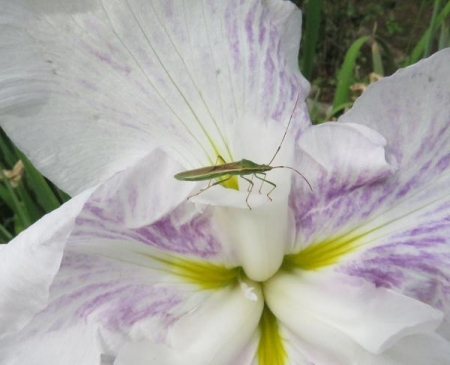 お花の蝶 086