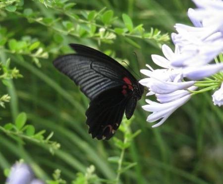 お花の蝶 087