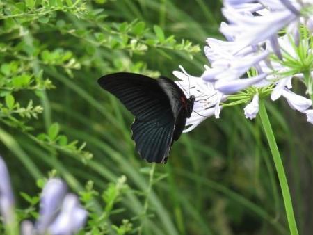 お花の蝶 088