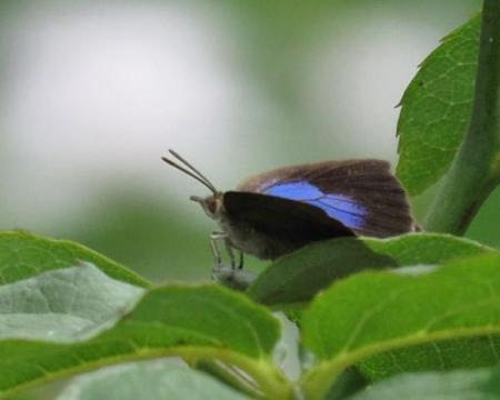 お花の蝶 014