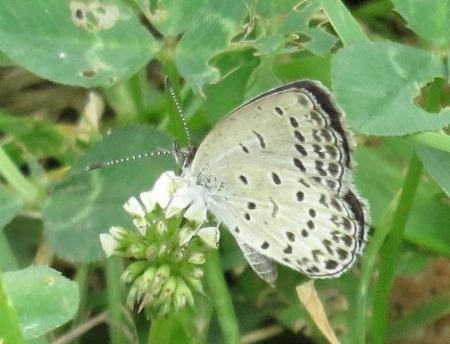 お花の蝶 025