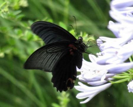 お花の蝶 089
