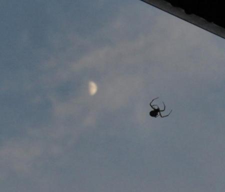 蜘蛛とお月様 003