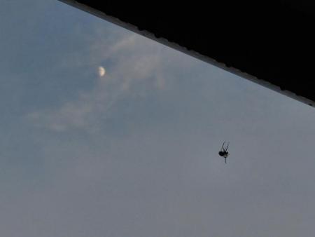 蜘蛛とお月様 002