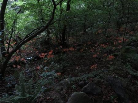 キツネ八幡岳の 129