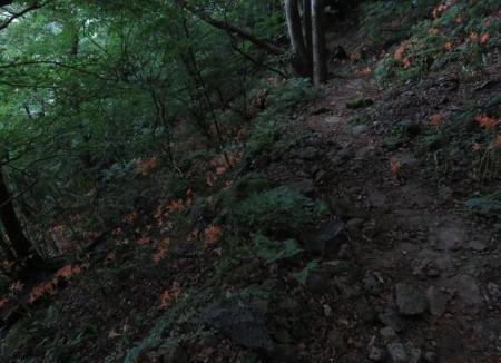 キツネ八幡岳の 128
