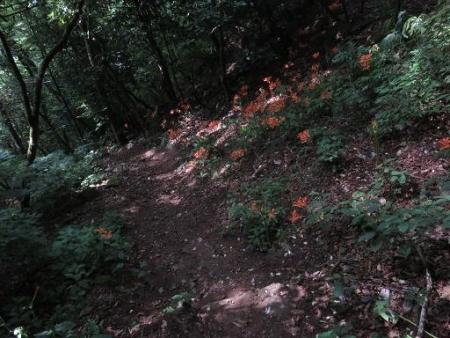 キツネ八幡岳の 105