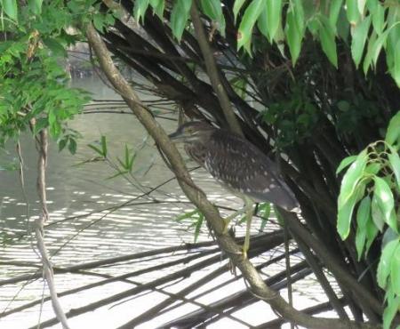 石丸山公園のトンボ蝶 075