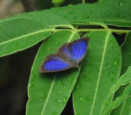 石丸山公園のトンボ蝶 044
