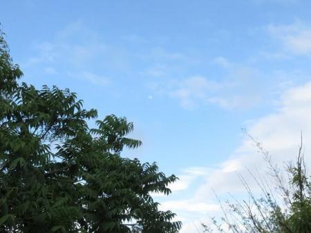 石丸山公園のトンボ蝶 070