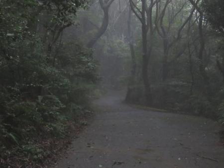 清水山 霧雨ハグロトンボ 025