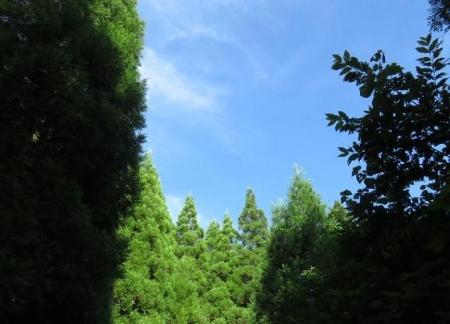 カラ迫岳に登る 036