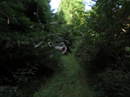 カラ迫岳に登る 035
