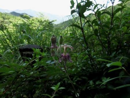 カラ迫岳に登る 060