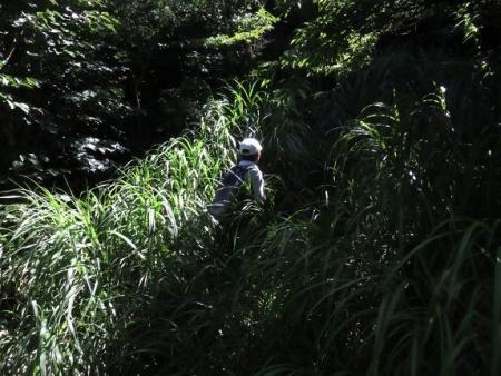 カラ迫岳に登る 093