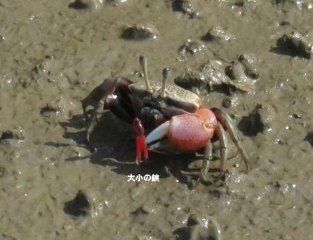 東与賀大授搦探鳥会9・10日 047