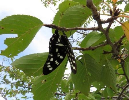 蝶と再会 051