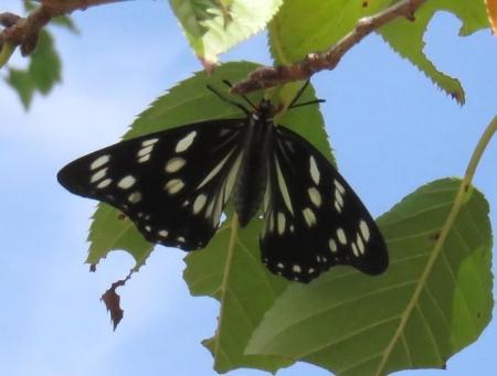 蝶と再会 020