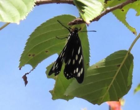 蝶と再会 018