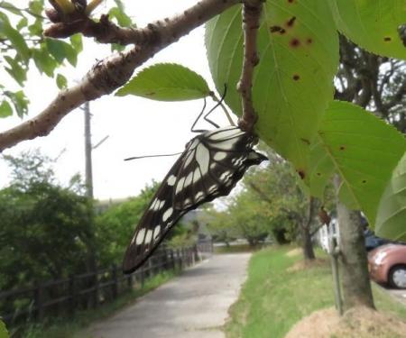 蝶と再会 045