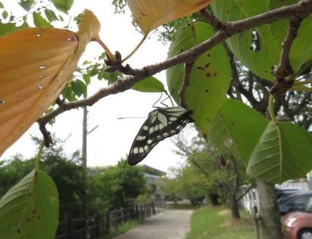 蝶と再会 047