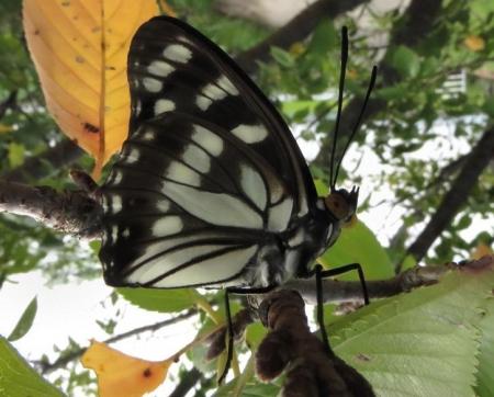 蝶と再会 049
