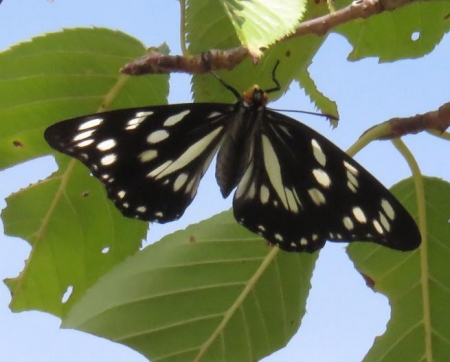 蝶と再会 023
