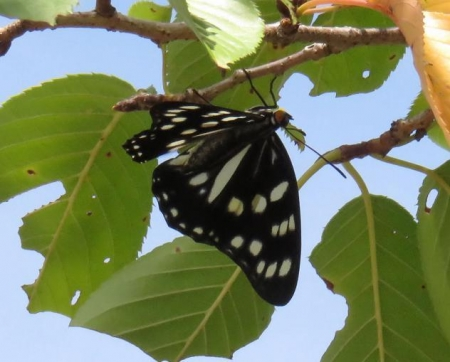 蝶と再会 025
