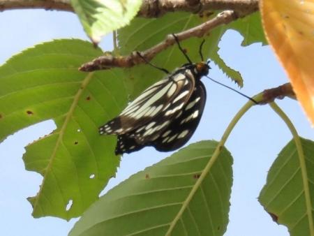蝶と再会 026