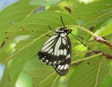蝶と再会 017